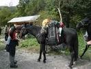 лошадь с рюкзаками