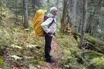 в лесу на спуске к р. Чистой
