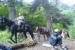 лошади заказника