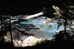 дерево через реку Киша